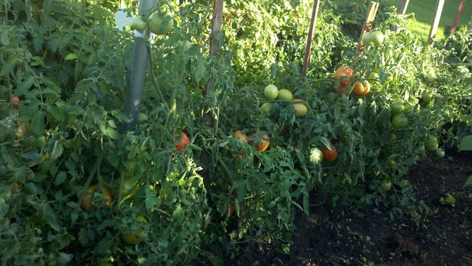 tina-roc-garden-4