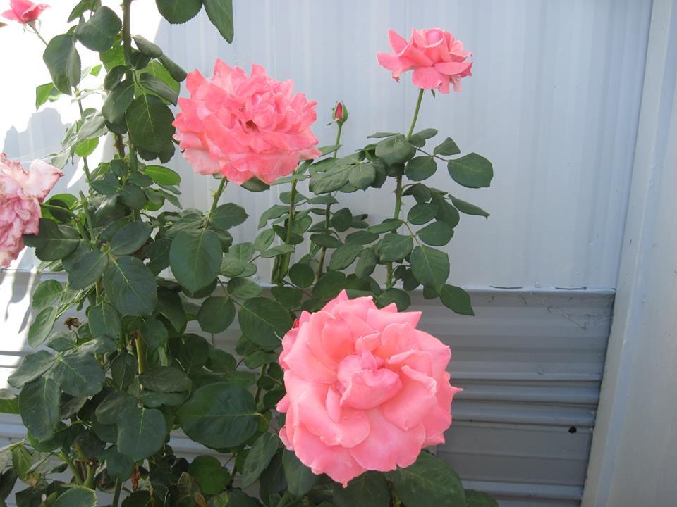 flowers-42